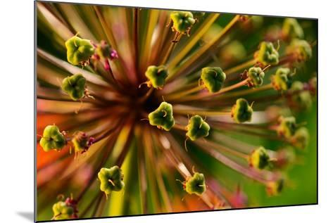 An Abstract Dynamic Plant Close-Up-gornostay-Mounted Photographic Print