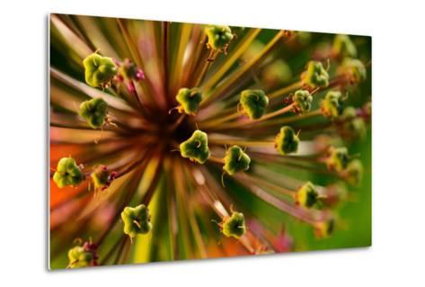An Abstract Dynamic Plant Close-Up-gornostay-Metal Print