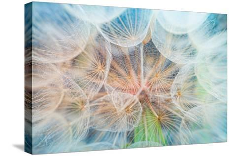 Dandelion Inside,Macro Photography-hofhauser-Stretched Canvas Print