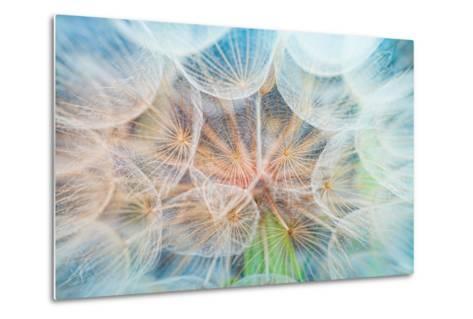 Dandelion Inside,Macro Photography-hofhauser-Metal Print