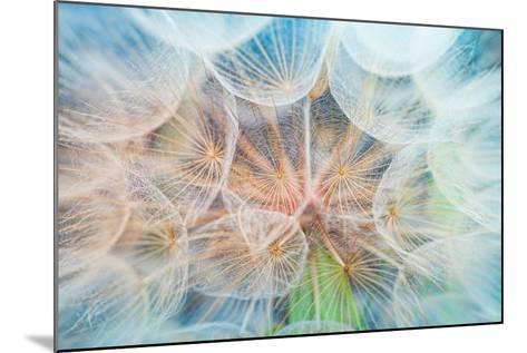 Dandelion Inside,Macro Photography-hofhauser-Mounted Photographic Print