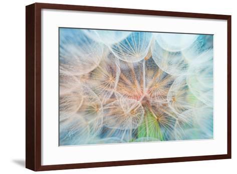 Dandelion Inside,Macro Photography-hofhauser-Framed Art Print