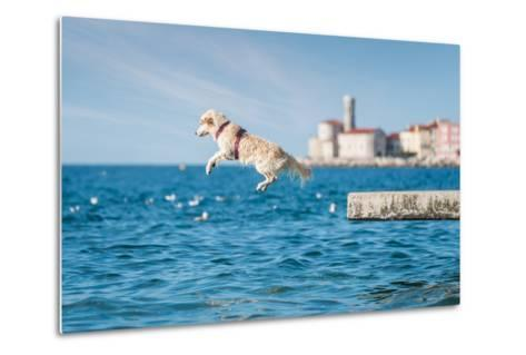 Golden Retriever Dog Jumping into Sea- sonsam-Metal Print