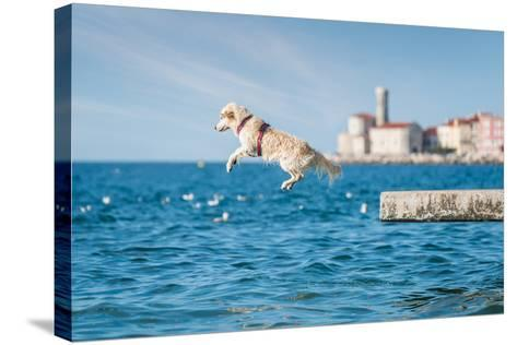 Golden Retriever Dog Jumping into Sea- sonsam-Stretched Canvas Print