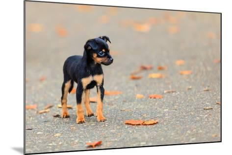 Animals Homeless. Little Dog Cute Puppy Pet Outdoor- Voyagerix-Mounted Photographic Print