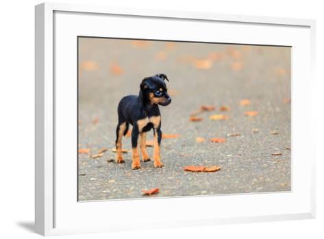 Animals Homeless. Little Dog Cute Puppy Pet Outdoor- Voyagerix-Framed Art Print