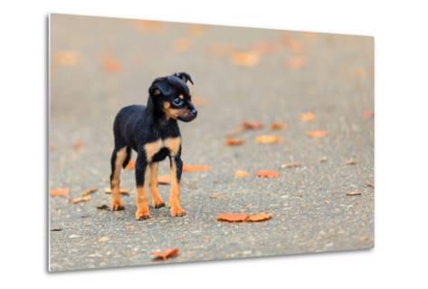 Animals Homeless. Little Dog Cute Puppy Pet Outdoor- Voyagerix-Metal Print