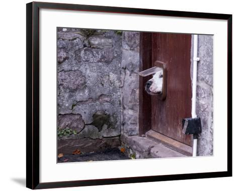 Dog Poking its Head through a Cat Flap-david muscroft-Framed Art Print