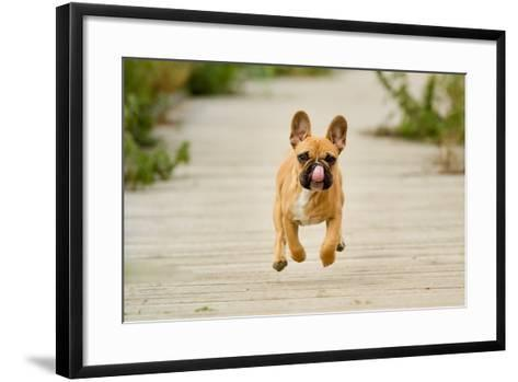 Purebred Dog Outdoors on a Summer Day.-Mikkel Bigandt-Framed Art Print
