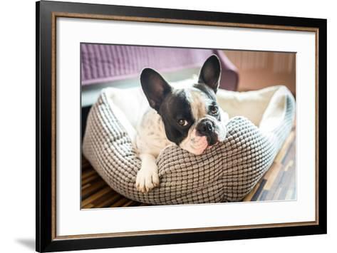 Adorable French Bulldog on the Lair-Patryk Kosmider-Framed Art Print