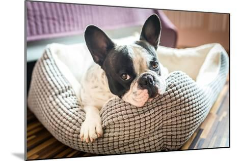 Adorable French Bulldog on the Lair-Patryk Kosmider-Mounted Photographic Print