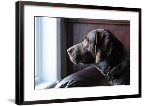A German Short Haired Pointer Hunting Dog Looking outside through a Window in Rich Brown Tones-Lost Mountain Studio-Framed Art Print