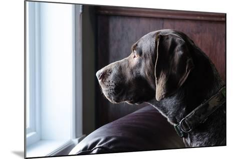 A German Short Haired Pointer Hunting Dog Looking outside through a Window in Rich Brown Tones-Lost Mountain Studio-Mounted Photographic Print
