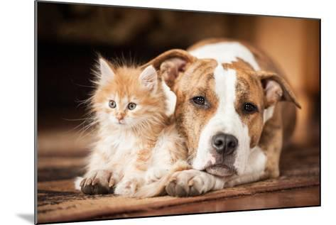 American Staffordshire Terrier Dog with Little Kitten-Grigorita Ko-Mounted Photographic Print