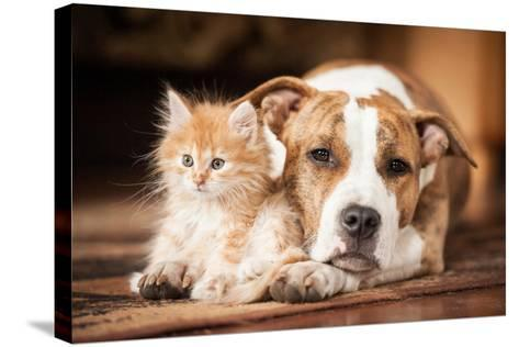 American Staffordshire Terrier Dog with Little Kitten-Grigorita Ko-Stretched Canvas Print