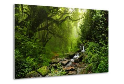 Subtropical Forest in Nepal-Quick Shot-Metal Print