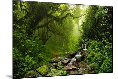 Subtropical Forest in Nepal-Quick Shot-Mounted Photographic Print