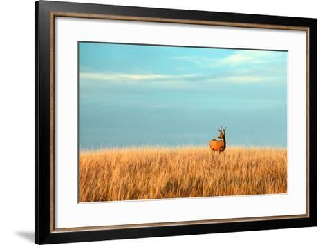 A Mule Deer Buck Stands in a Tall Bed of Grass and Looks into the Autumn Sun on the Great Plains.-Todd Klassy-Framed Art Print