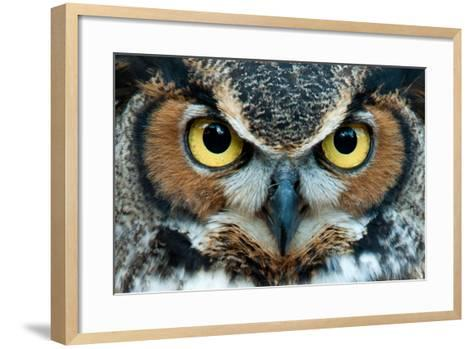 Great Horned Owl Staring with Golden Eyes- jadimages-Framed Art Print