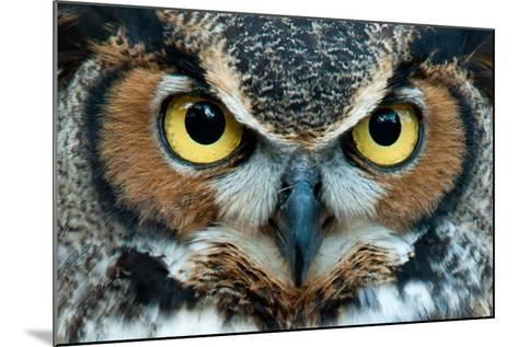 Great Horned Owl Staring with Golden Eyes- jadimages-Mounted Photographic Print