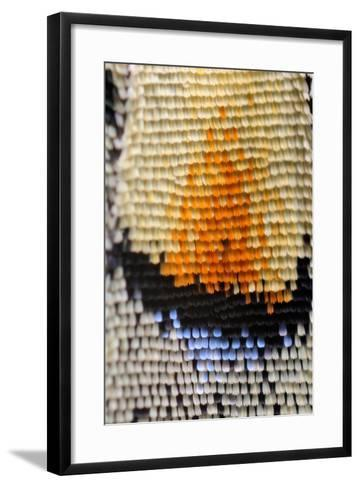 Extreme Macro of Swallowtail Butterfly Wing-D Kucharski K Kucharska-Framed Art Print