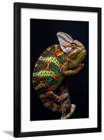 Yemen Chameleon-arturasker-Framed Art Print