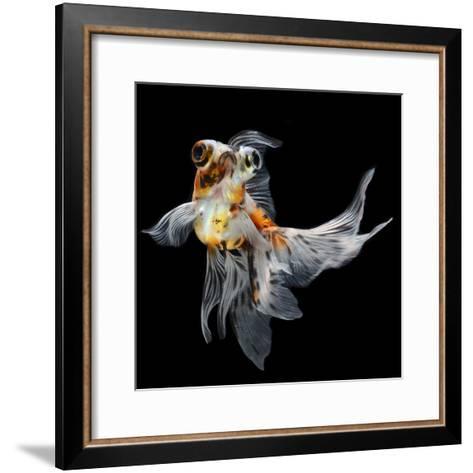 Goldfish Isolated on Black Background- bluehand-Framed Art Print