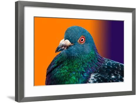 Pigeon close up Portrait Isolated in Color Gradient-Altin Osmanaj-Framed Art Print