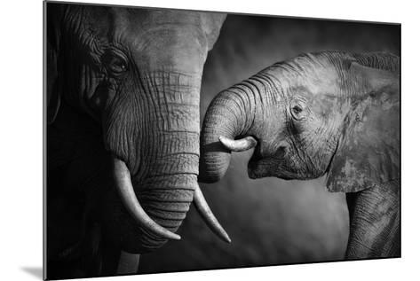 Elephants Showing Affection (Artistic Processing)-Johan Swanepoel-Mounted Photographic Print