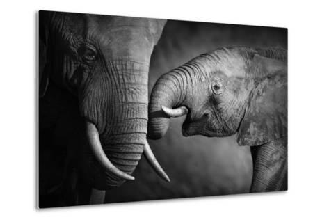 Elephants Showing Affection (Artistic Processing)-Johan Swanepoel-Metal Print