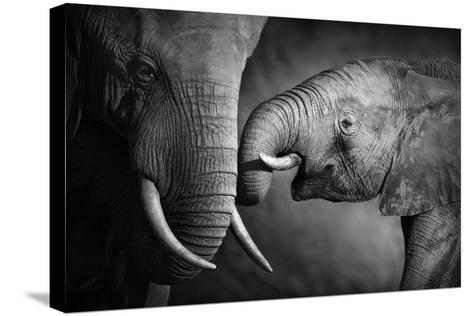 Elephants Showing Affection (Artistic Processing)-Johan Swanepoel-Stretched Canvas Print