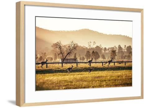 Group of Australian Kangaroos at Hunter Valley, Australia-Andrey Bayda-Framed Art Print