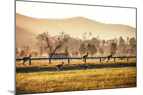 Group of Australian Kangaroos at Hunter Valley, Australia-Andrey Bayda-Mounted Photographic Print