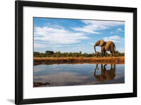 A Single Elephant is Reflected on the Still Surface of a Waterhole on a Beautiful Day in Botswana-Mike Dexter-Framed Art Print