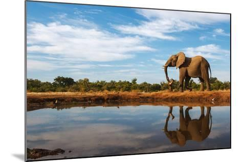 A Single Elephant is Reflected on the Still Surface of a Waterhole on a Beautiful Day in Botswana-Mike Dexter-Mounted Photographic Print