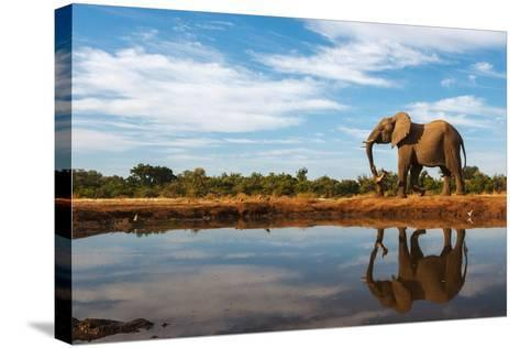 A Single Elephant is Reflected on the Still Surface of a Waterhole on a Beautiful Day in Botswana-Mike Dexter-Stretched Canvas Print