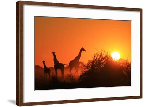 Giraffe Silhouette - African Wildlife Background - Beauty in Color and Freedom-Stacey Ann Alberts-Framed Art Print