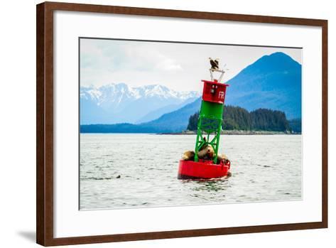 Seals and Bald Eagles on the inside Passage near Juneau, Alaska.-Kushal Bose-Framed Art Print