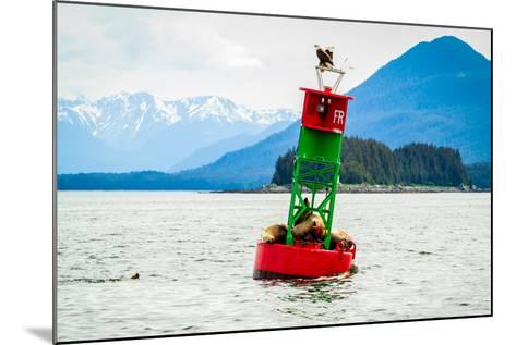 Seals and Bald Eagles on the inside Passage near Juneau, Alaska.-Kushal Bose-Mounted Photographic Print