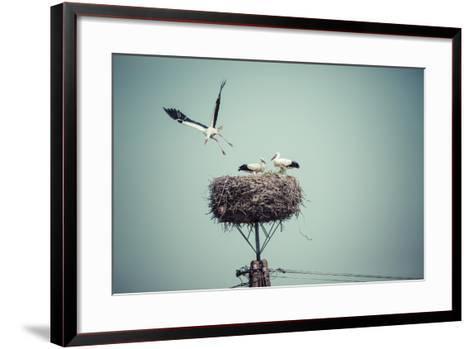 Stork with Baby Birds in the Nest, Poland.- Curioso-Framed Art Print