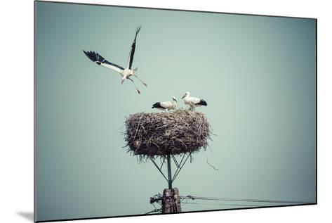 Stork with Baby Birds in the Nest, Poland.- Curioso-Mounted Photographic Print