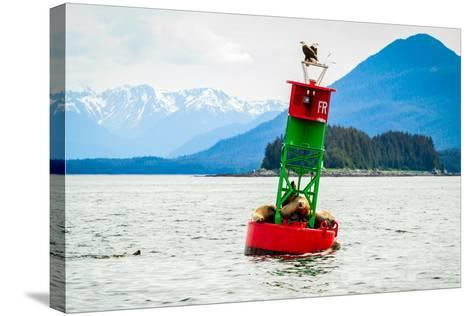 Seals and Bald Eagles on the inside Passage near Juneau, Alaska.-Kushal Bose-Stretched Canvas Print