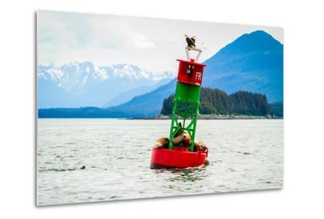 Seals and Bald Eagles on the inside Passage near Juneau, Alaska.-Kushal Bose-Metal Print