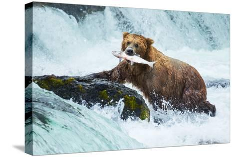 Brown Bear on Alaska-Galyna Andrushko-Stretched Canvas Print