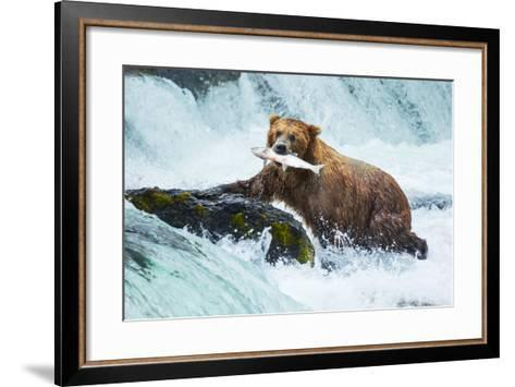 Brown Bear on Alaska-Galyna Andrushko-Framed Art Print