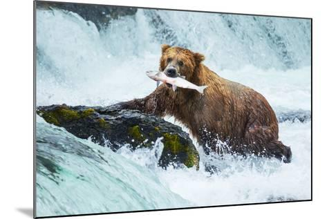 Brown Bear on Alaska-Galyna Andrushko-Mounted Photographic Print
