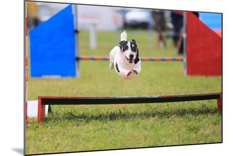 Racing Dog for Agility-francesco de marco-Mounted Photographic Print