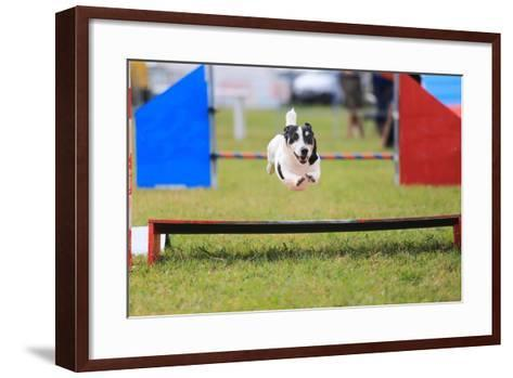 Racing Dog for Agility-francesco de marco-Framed Art Print