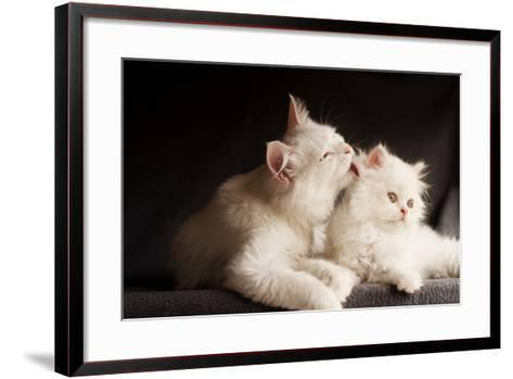 Adorable White Persian Cats, Mother Licking its Cub- DreamBig-Framed Art Print