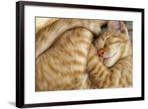 Sweet Dreams, Sleeping Cat-Bildagentur Zoonar GmbH-Framed Art Print
